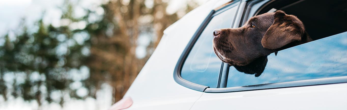 2. Seguridad vial y mascotas