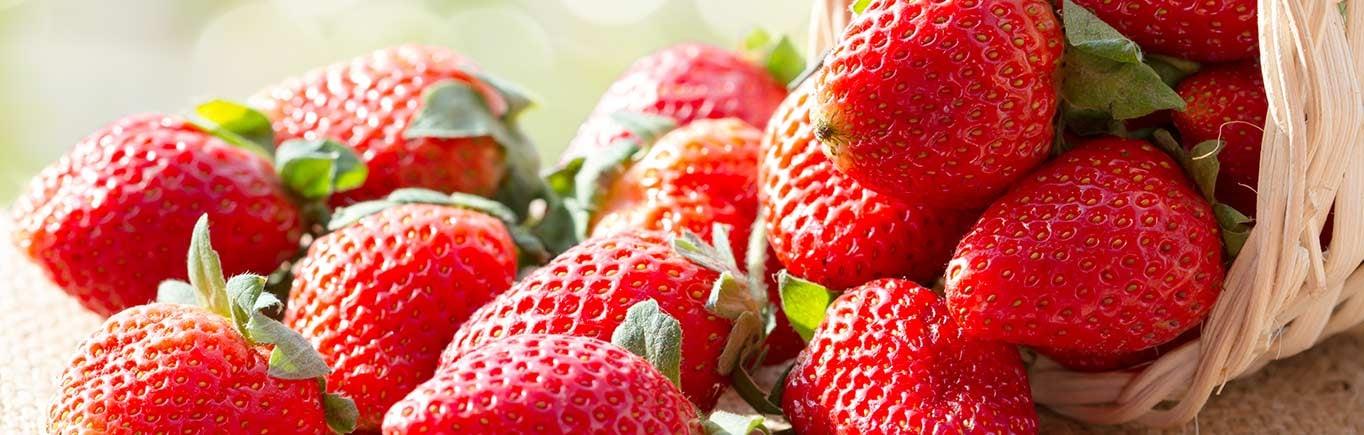Comer-fresas