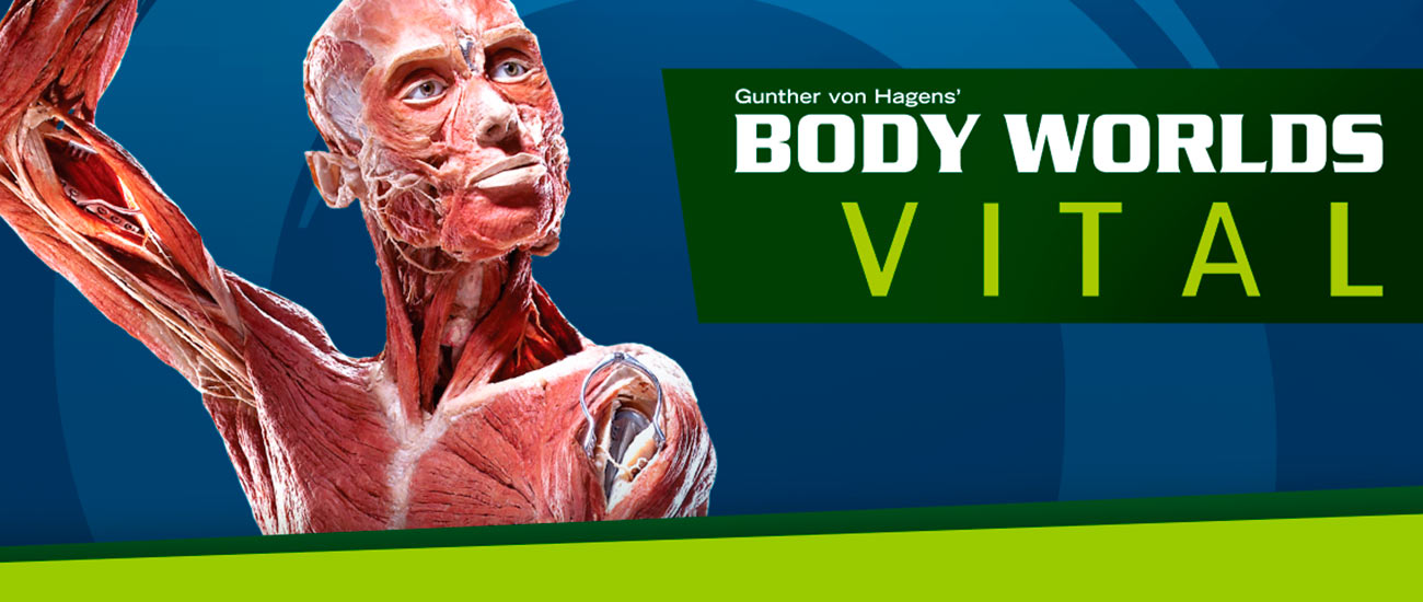 Body Worlds - Banco Industrial